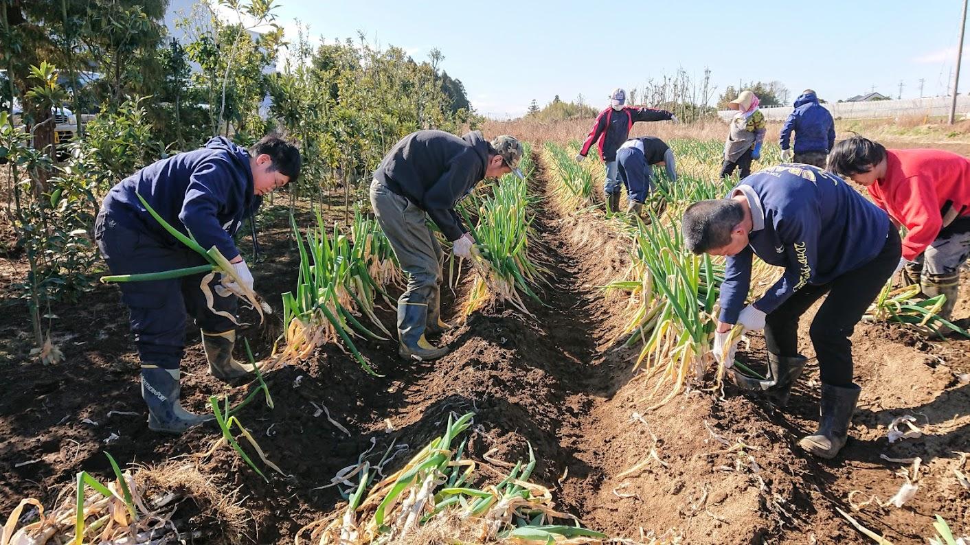農園での収穫作業