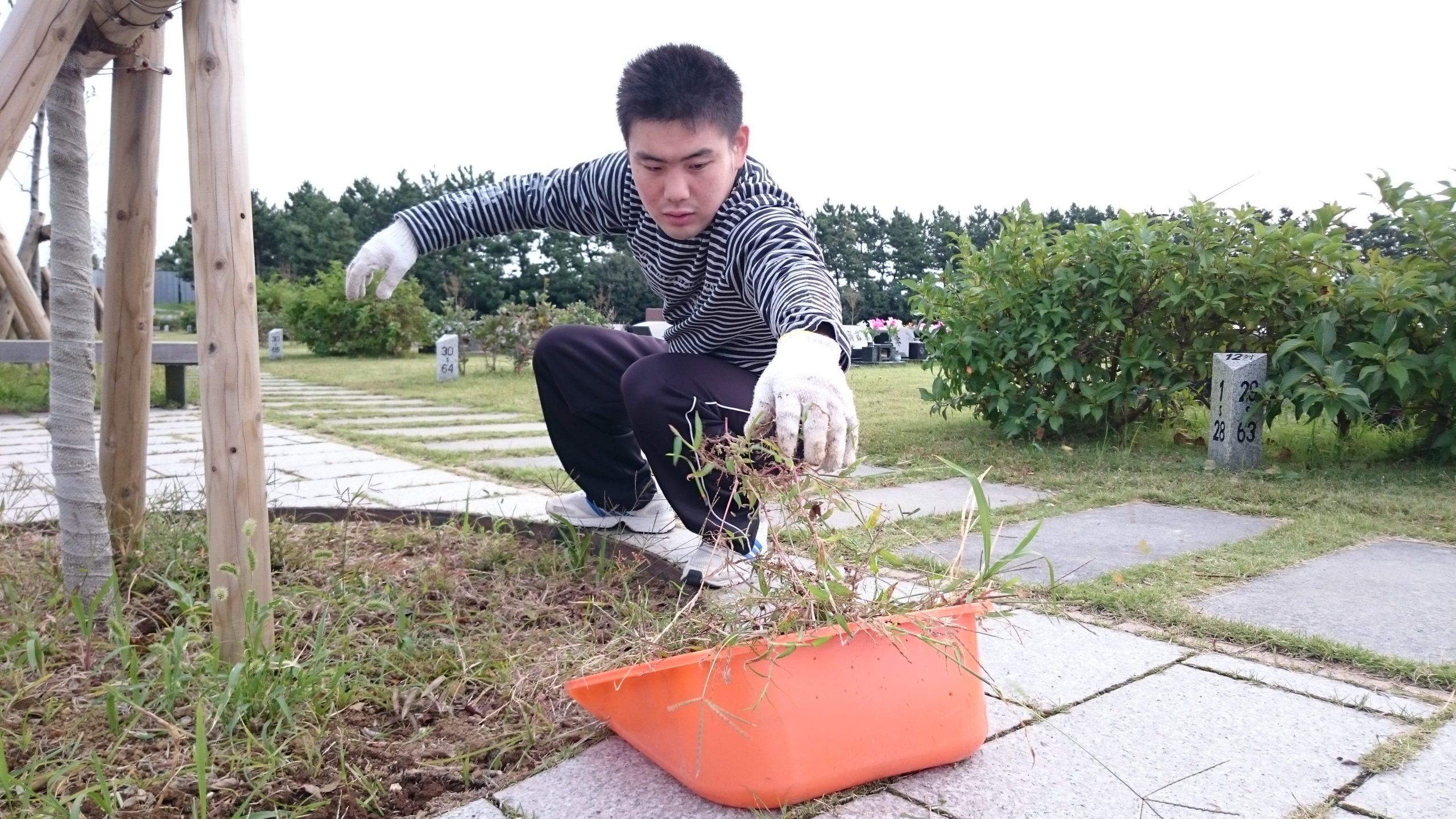除草作業の様子